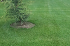 fertilized-yard